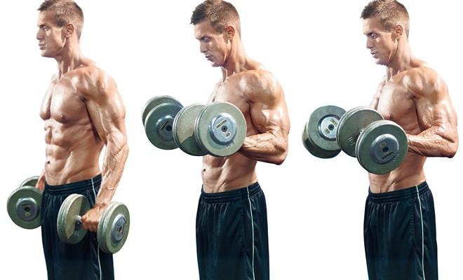 Curl Zottman biceps - Fitness Guia - FITNESS-GUIA.ES