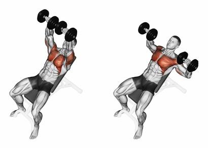 superior de los músculos pectorales